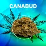 Weedzy Canabud CBD