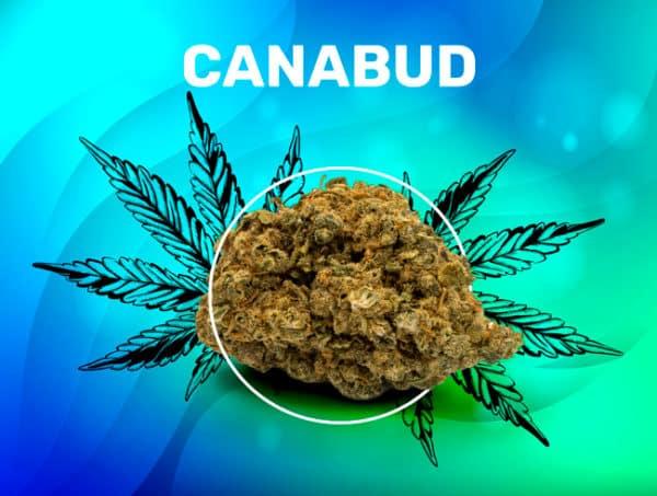 Canabud CBD weedzy