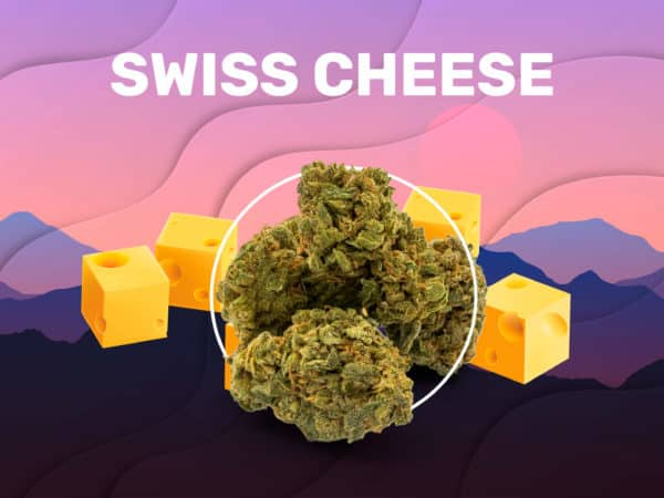 Swiss Cheese CBD