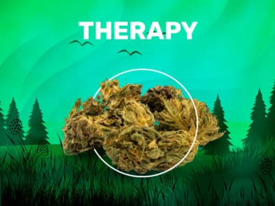 Therapy CBD weedzy