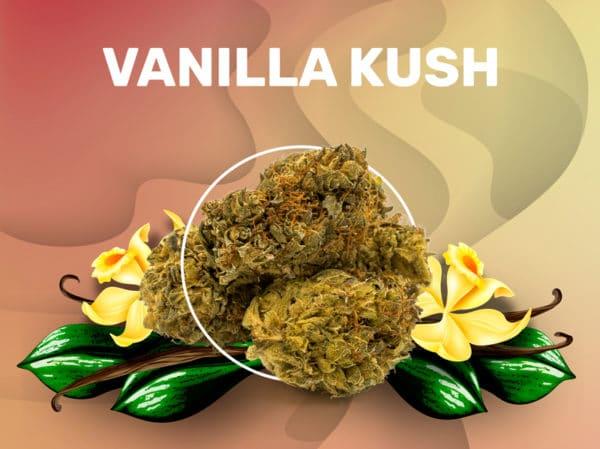 Vanilla Kush CBD weedzy