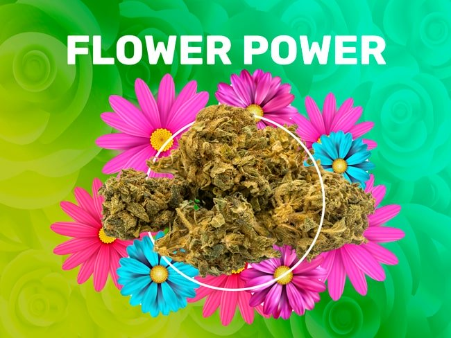Flower Power CBD weedzy