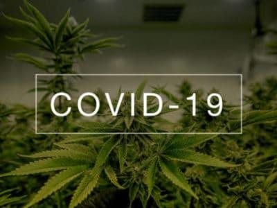 CBD against covid19