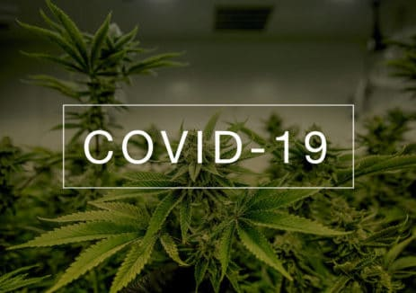 CBD against covid19