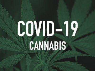 CBD vs COVID19