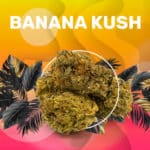 BananKush_Visuel_optimized