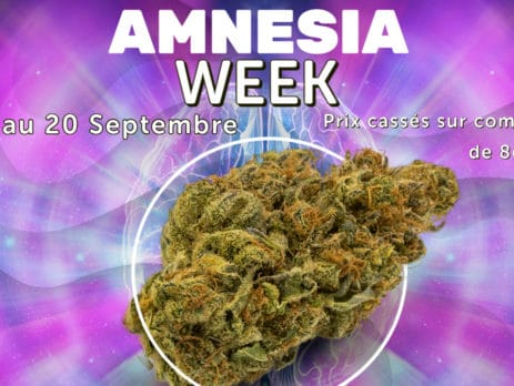 amnesia week weedzy