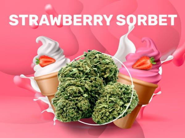 strawberry sorbet CBD weedzy